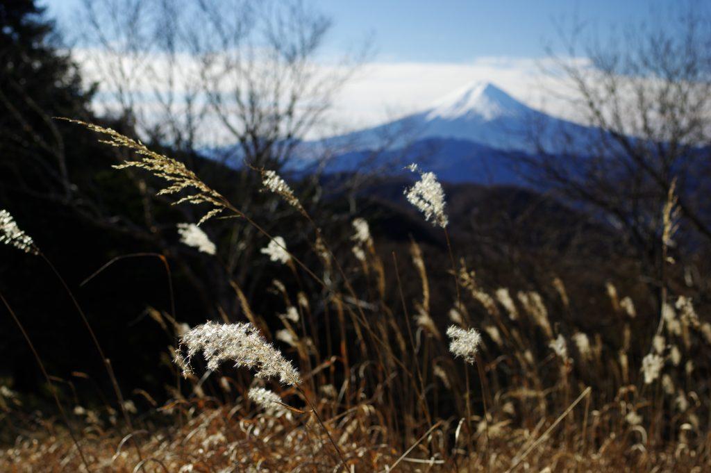 川胡桃沢ノ頭付近から見た富士山