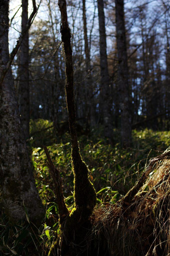 黒岳周辺の樹林帯